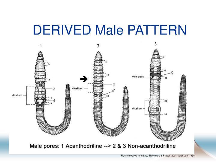 DERIVED Male PATTERN