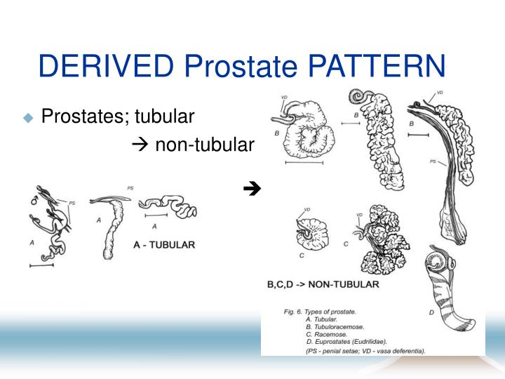 DERIVED Prostate PATTERN