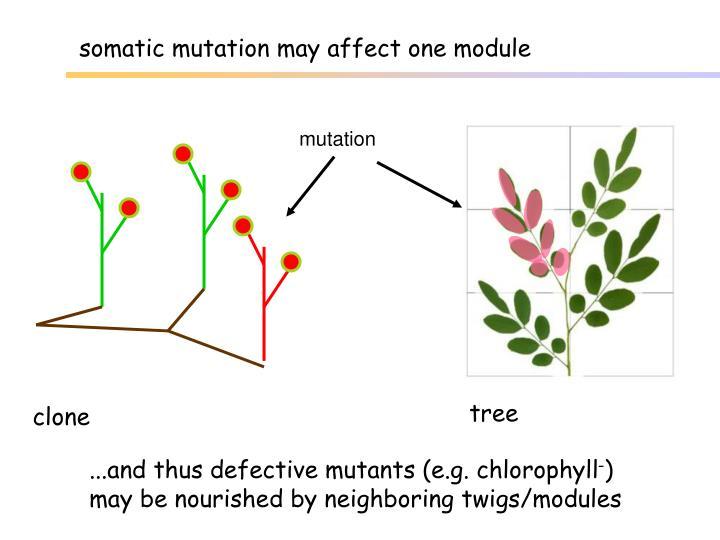 somatic mutation may affect one module