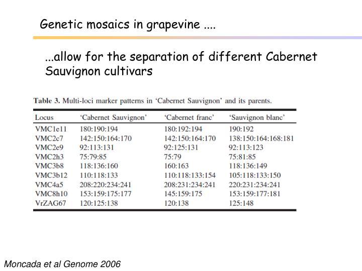 Genetic mosaics in grapevine ....