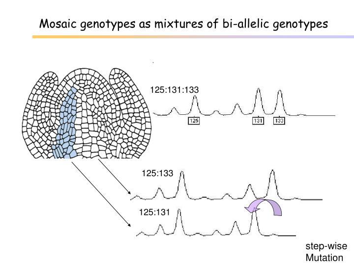 Mosaic genotypes as mixtures of bi-allelic genotypes