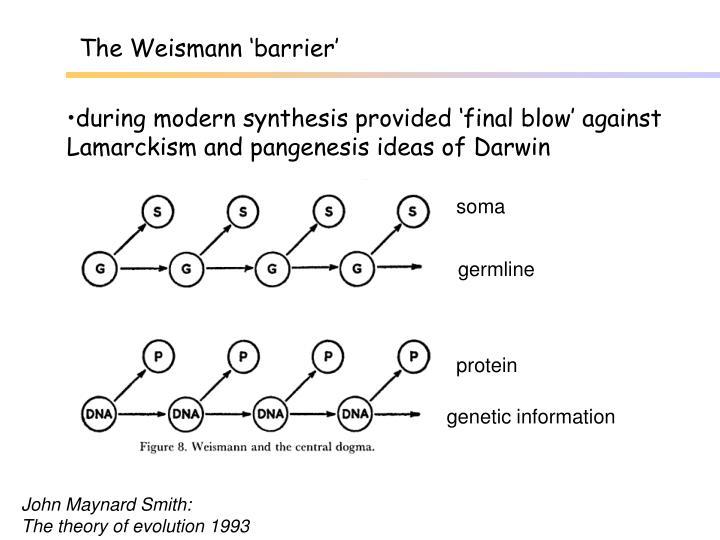 The Weismann 'barrier'