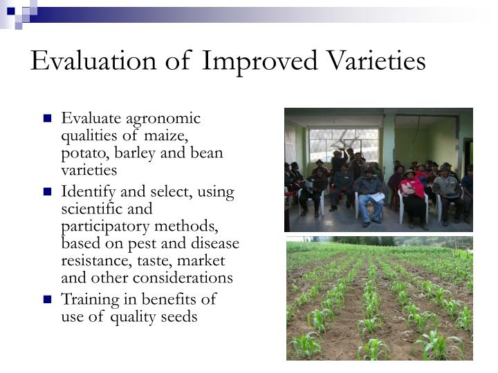Evaluation of Improved Varieties