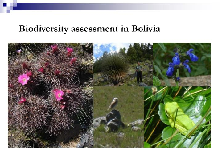 Biodiversity assessment in Bolivia