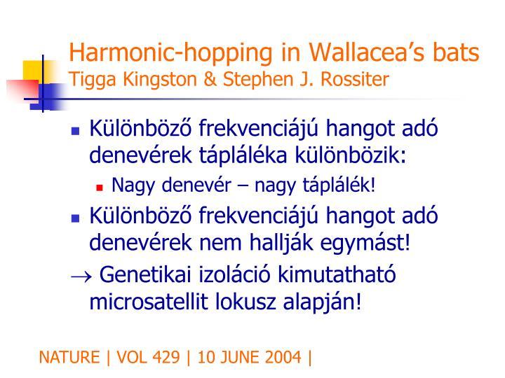 Harmonic-hopping in Wallacea's bats