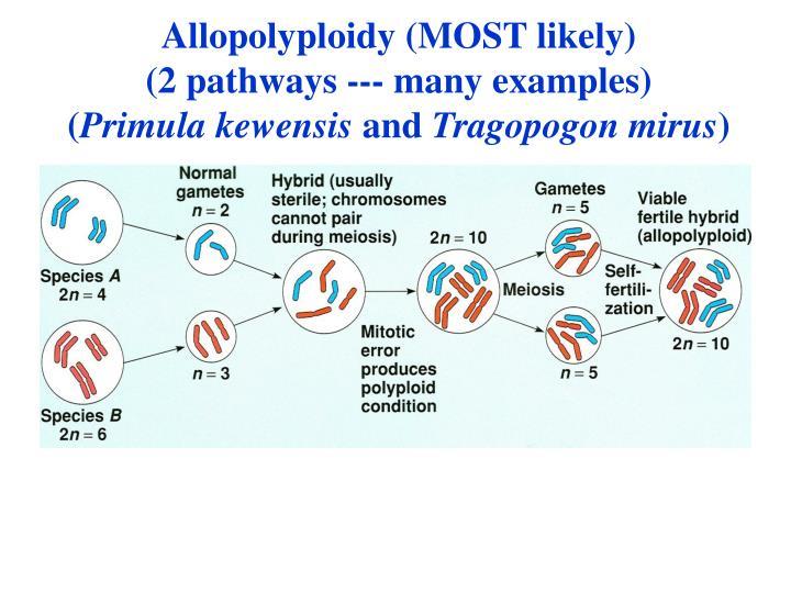 Allopolyploidy