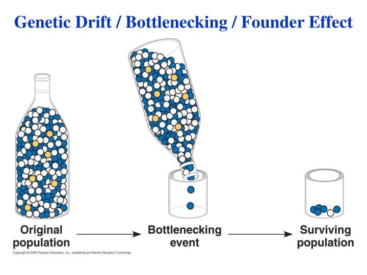 Genetic Drift / Bottlenecking / Founder Effect