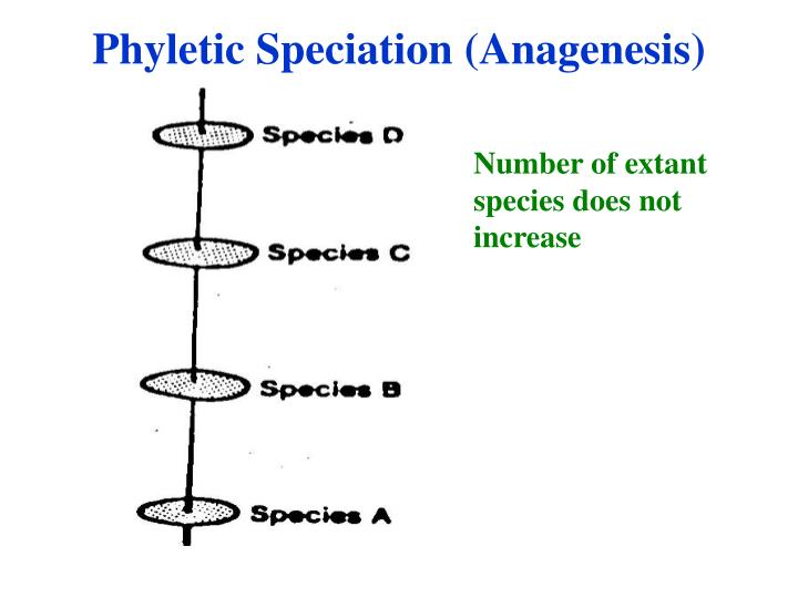 Phyletic