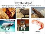 why the maya1