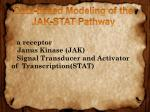 data based modeling of the jak stat pathway