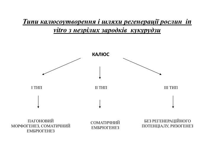 Типи калюсоутворення і шляхи регенерації рослин