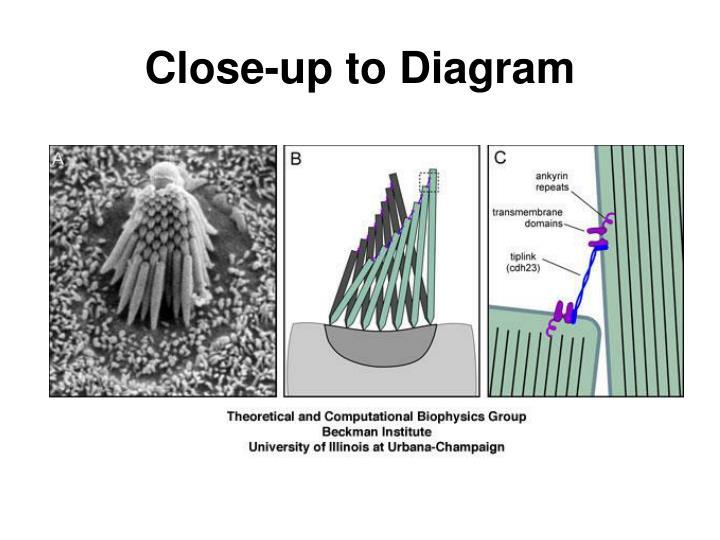 Close-up to Diagram