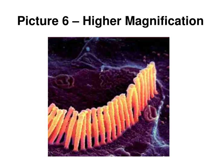 Picture 6 – Higher Magnification