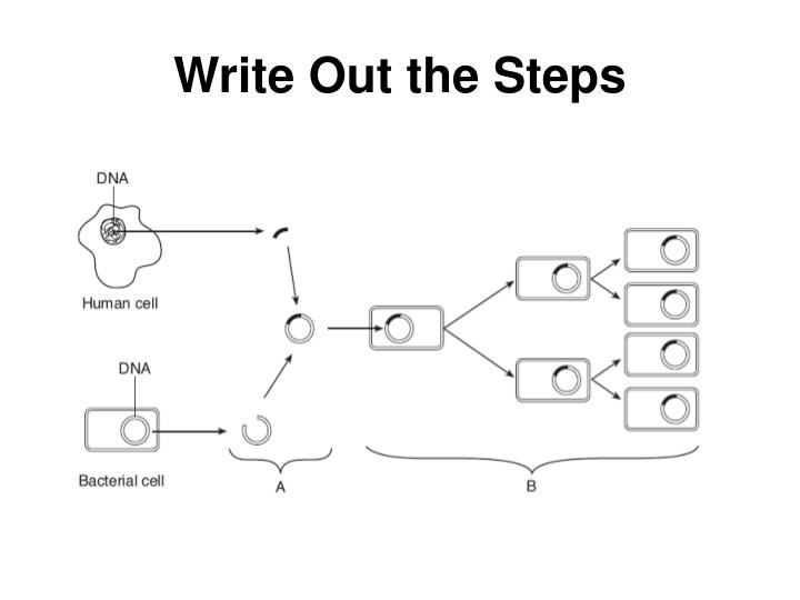 Write Out the Steps