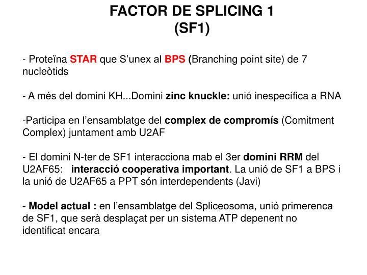 FACTOR DE SPLICING 1 (SF1)