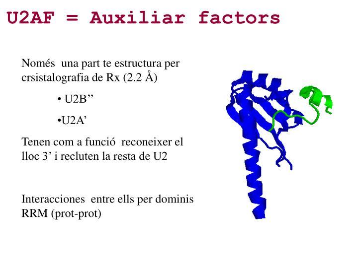 U2AF = Auxiliar factors