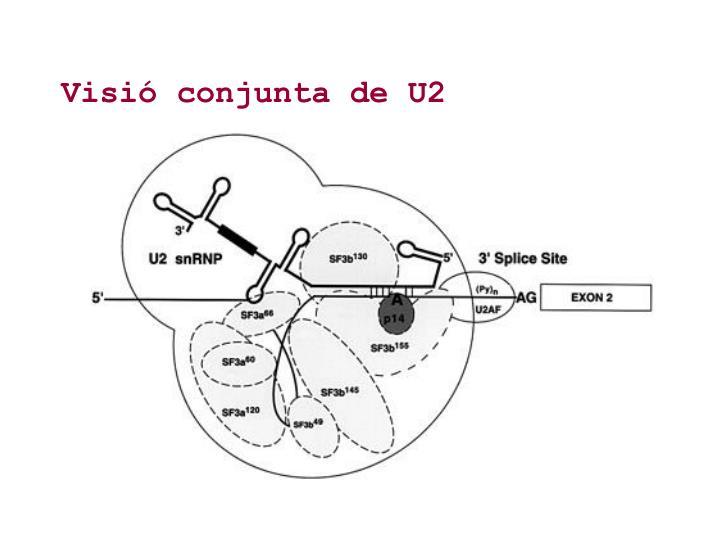 Visió conjunta de U2