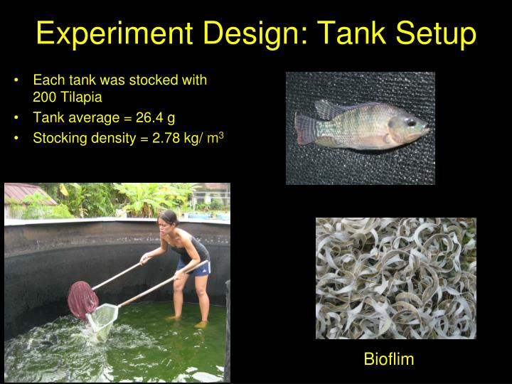 Each tank was stocked with 200 Tilapia