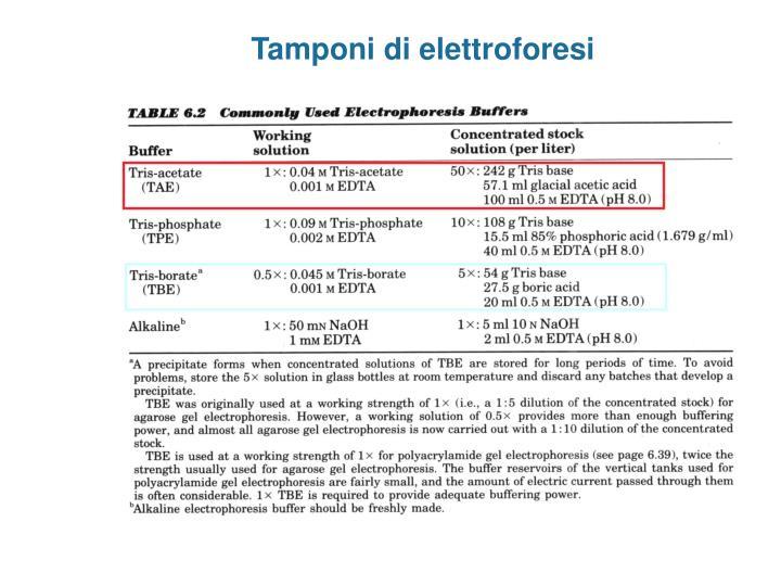 Tamponi di elettroforesi
