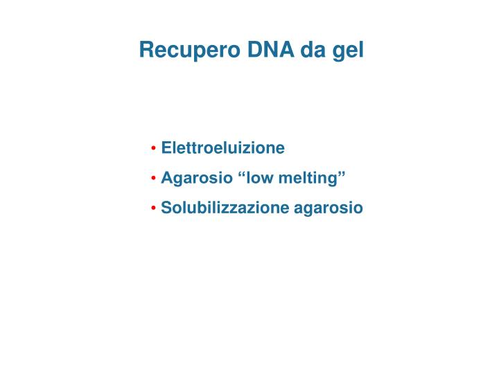 Recupero DNA da gel