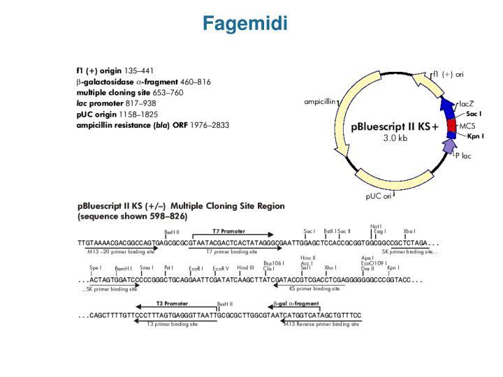 Fagemidi