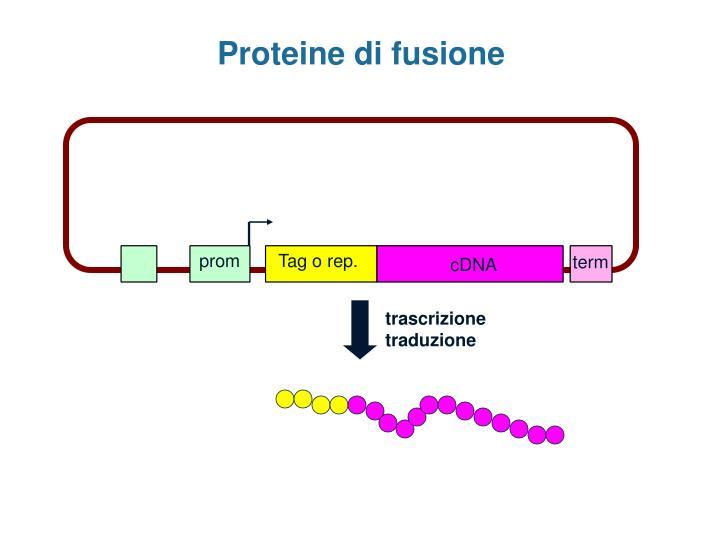 Proteine di fusione