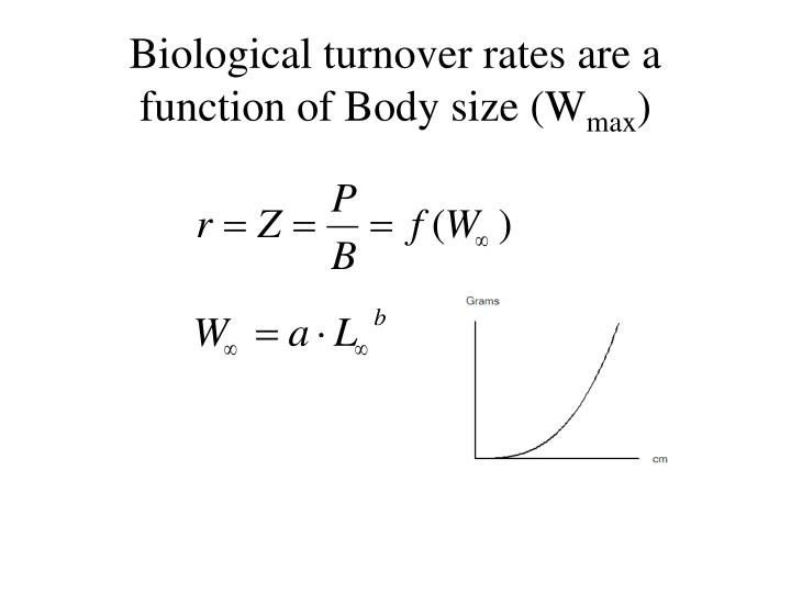 Biological turnover rates are a function of Body size (W