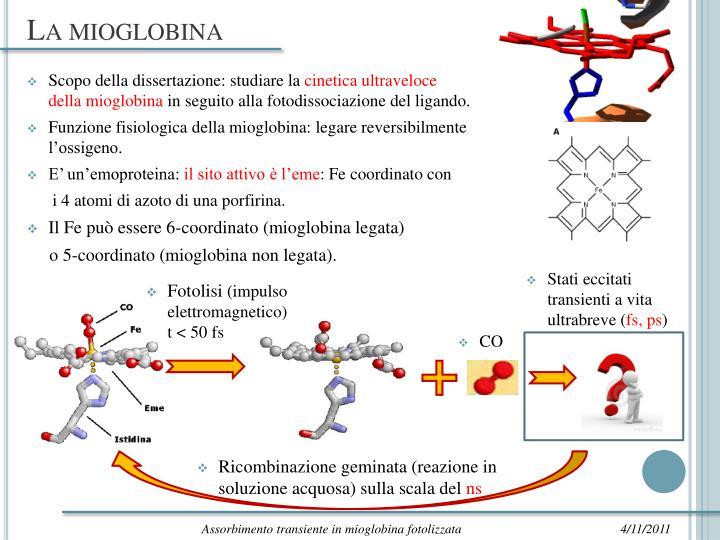 La mioglobina