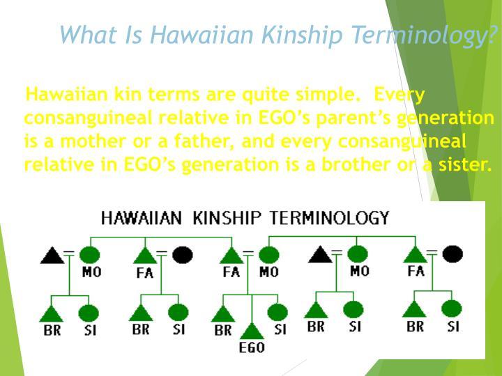 What Is Hawaiian Kinship Terminology?