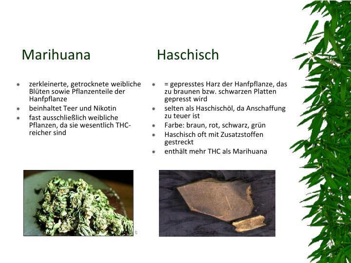zerkleinerte, getrocknete weibliche Blüten sowie Pflanzenteile der Hanfpflanze