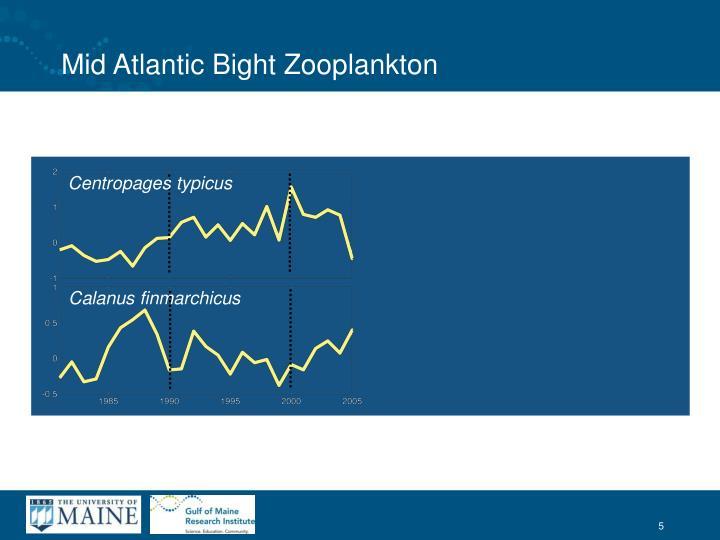 Mid Atlantic Bight Zooplankton