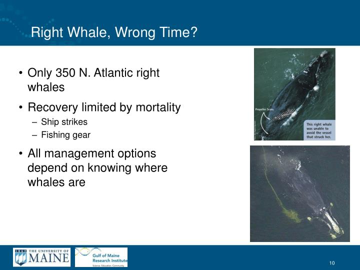 Right Whale, Wrong Time?