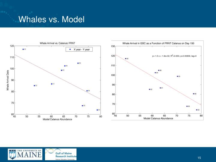 Whales vs. Model
