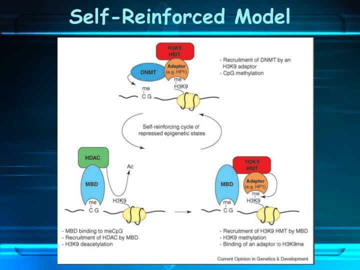 Self-Reinforced Model