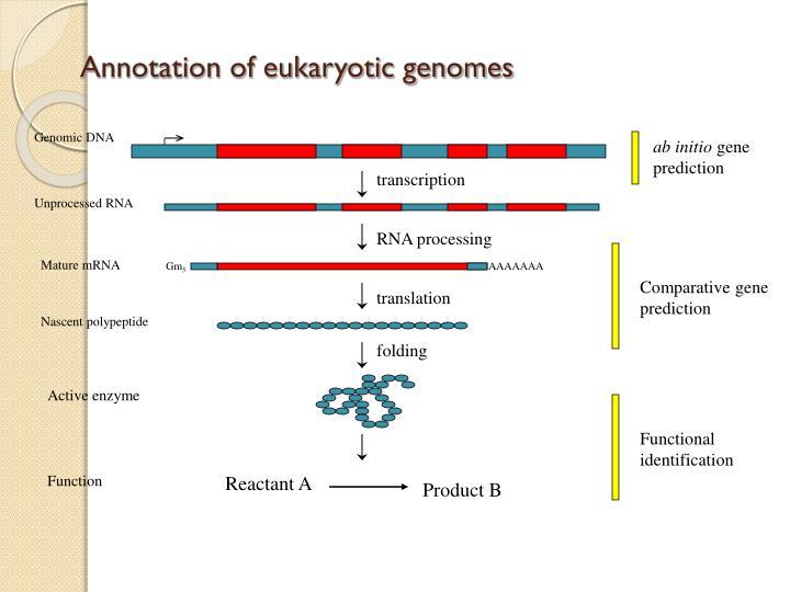 Annotation of eukaryotic genomes