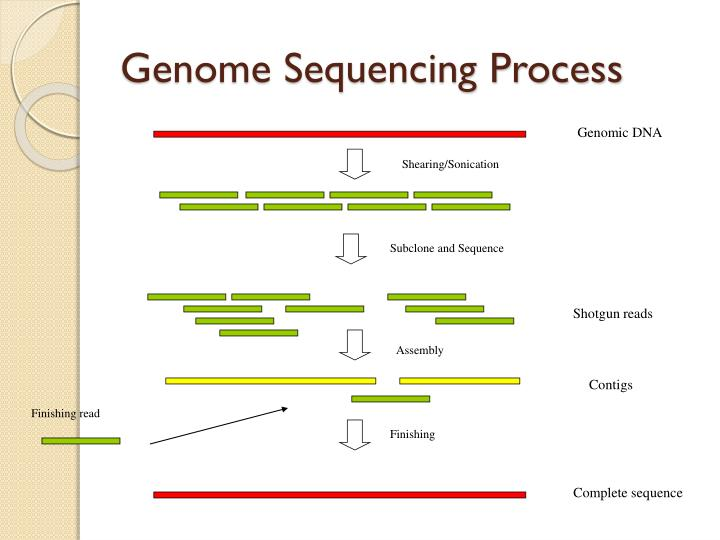 Genome Sequencing Process