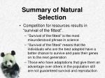 summary of natural selection1