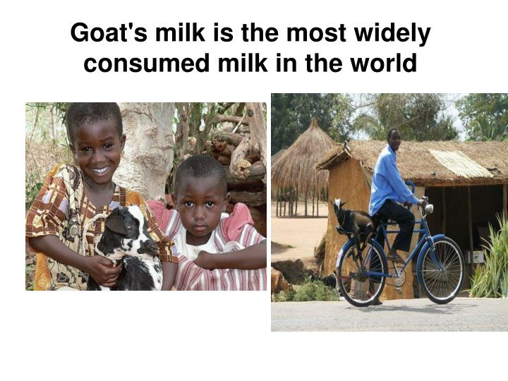 Goat's milk is the most widely consumed milk in the world