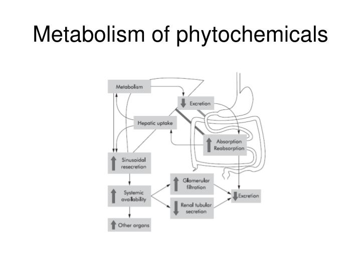 Metabolism of phytochemicals