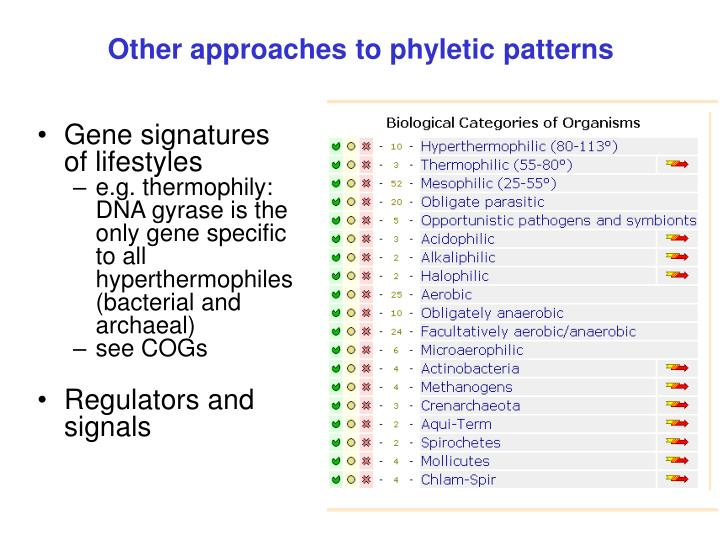 Other approaches to phyletic patterns
