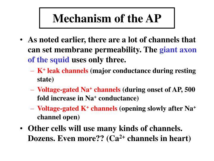 Mechanism of the AP