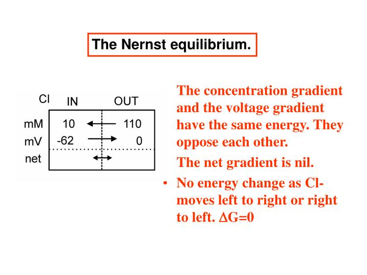The Nernst equilibrium.