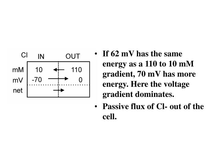 If 62 mV has the same energy as a 110 to 10 mM gradient, 70 mV has more energy. Here the voltage gradient dominates.