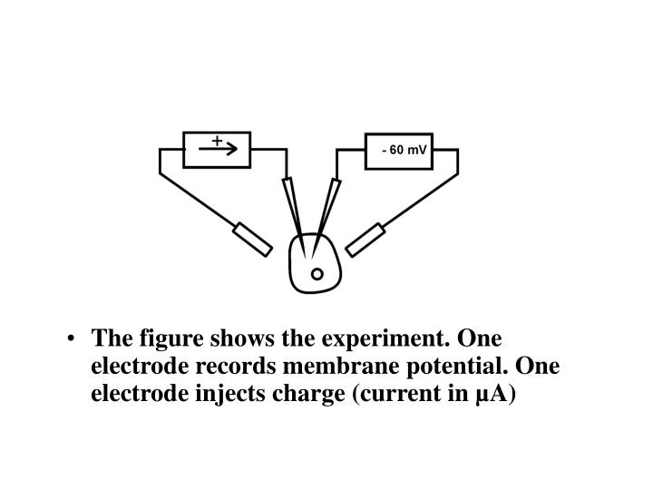 The figure shows the experiment. One electrode records membrane potential. One electrode injects charge (current in µA)