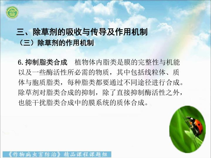 三、除草剂的吸收与传导及作用机制