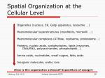 spatial organization at the cellular level