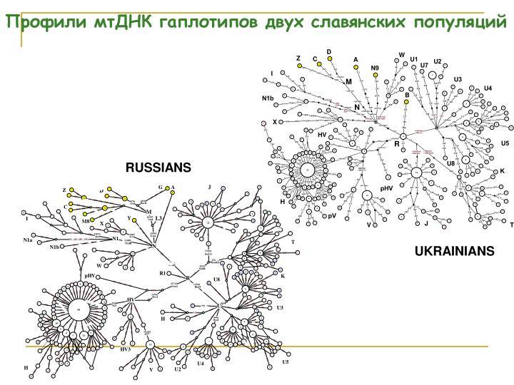 Профили мтДНК гаплотипов двух славянских популяций