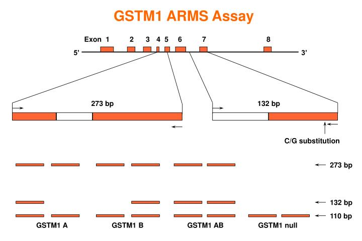 GSTM1 ARMS Assay