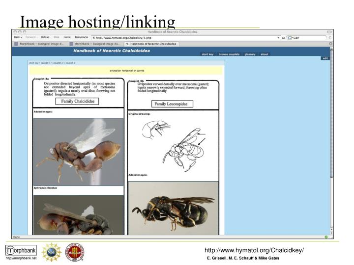 Image hosting/linking