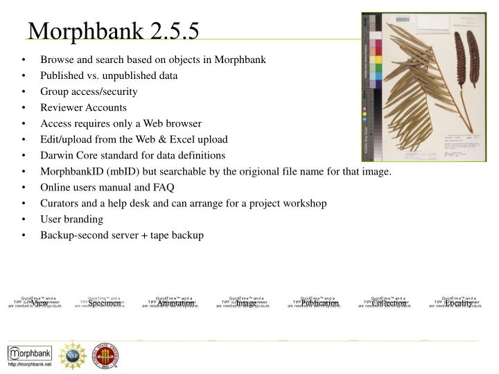 Browse and search based on objects in Morphbank
